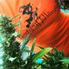 hempy-hallowen8-weed-leaf-marijuana-apeshit-clothing