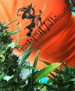 hempy-hallowen3-weed-leaf-marijuana-apeshit-clothing